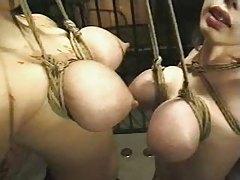 Asian Breast Suspension